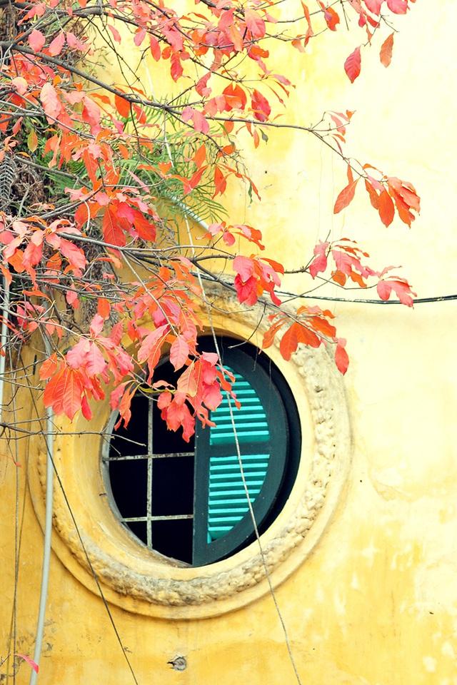 Vẻ đẹp thơ mộng trên những khung cửa sổ chỉ có ở mùa cây thay lá - Ảnh 7.