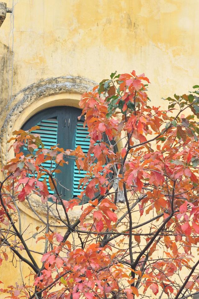 Vẻ đẹp thơ mộng trên những khung cửa sổ chỉ có ở mùa cây thay lá - Ảnh 4.