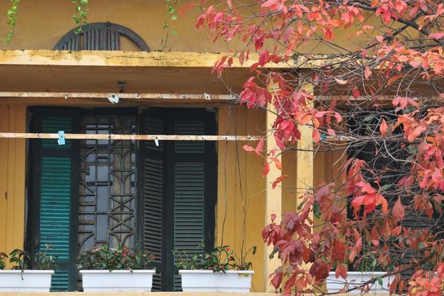 Vẻ đẹp thơ mộng trên những khung cửa sổ chỉ có ở mùa cây thay lá - Ảnh 5.