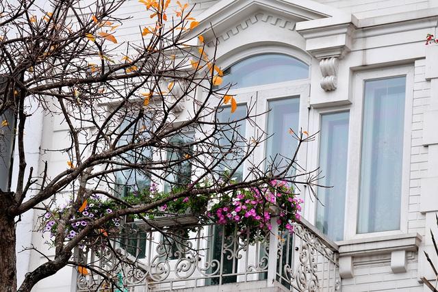 Vẻ đẹp thơ mộng trên những khung cửa sổ chỉ có ở mùa cây thay lá - Ảnh 1.