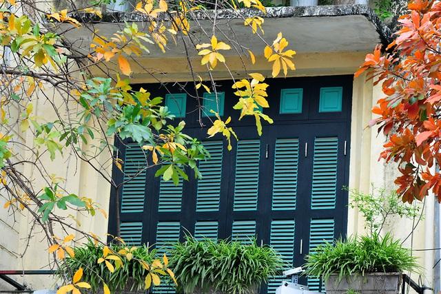 Vẻ đẹp thơ mộng trên những khung cửa sổ chỉ có ở mùa cây thay lá - Ảnh 3.