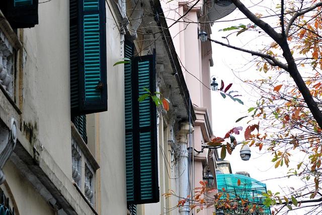 Vẻ đẹp thơ mộng trên những khung cửa sổ chỉ có ở mùa cây thay lá - Ảnh 8.