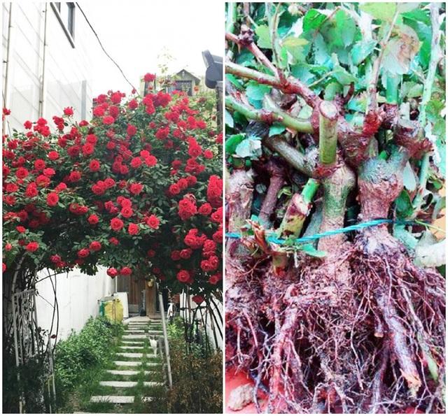 Chuộng hồng ngoại, mua phải hồng thải loại - Ảnh 2.
