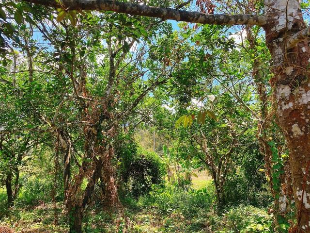 Nông trại rộng lớn khó sao Việt nào địch nổi của NTK Đỗ Mạnh Cường - Ảnh 12.