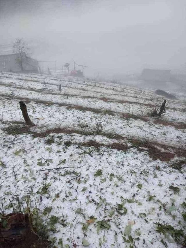 Mưa đá lớn tại Lai Châu khiến hơn 1.000 ngôi nhà hư hỏng - Ảnh 2.