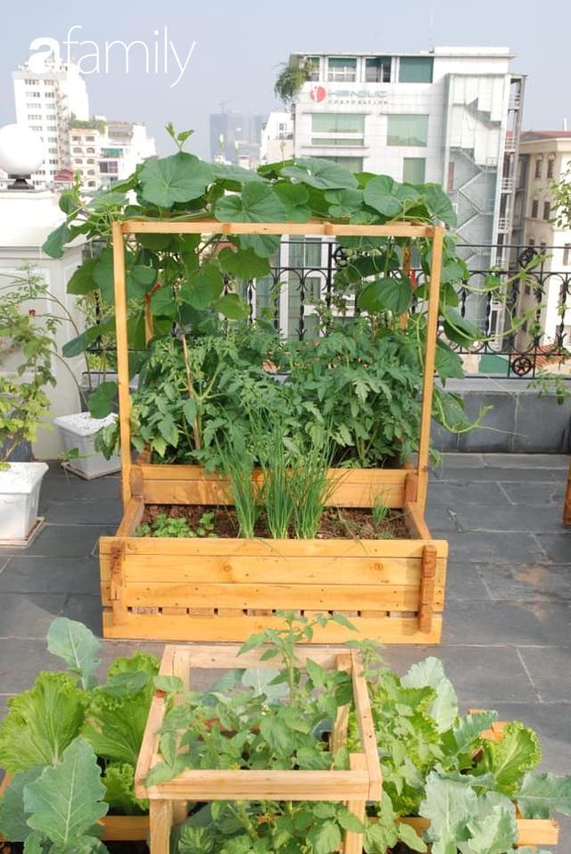 Chuyên gia trong lĩnh vực nhà vườn tại Hà Nội chia sẻ cách trồng rau đúng cách, đảm bảo nhà phố thoải mái rau sạch cho cả gia đình - Ảnh 13.