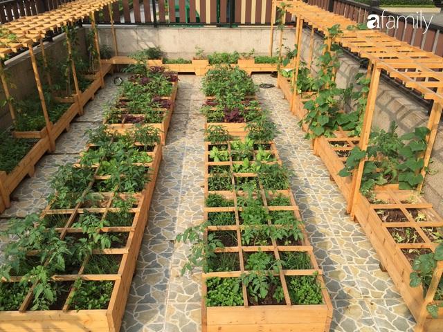 Chuyên gia trong lĩnh vực nhà vườn tại Hà Nội chia sẻ cách trồng rau đúng cách, đảm bảo nhà phố thoải mái rau sạch cho cả gia đình - Ảnh 14.