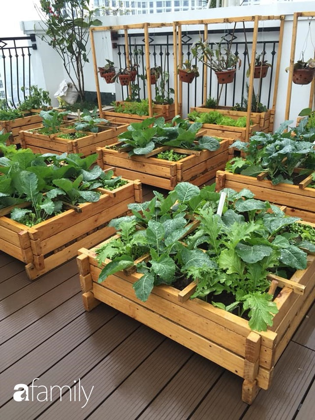 Chuyên gia trong lĩnh vực nhà vườn tại Hà Nội chia sẻ cách trồng rau đúng cách, đảm bảo nhà phố thoải mái rau sạch cho cả gia đình - Ảnh 15.