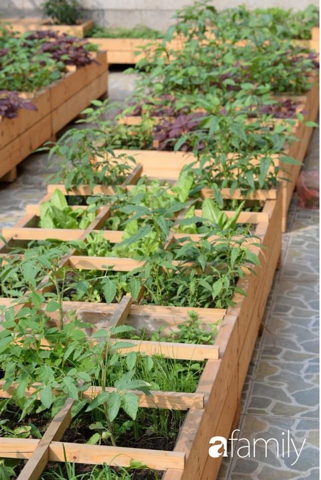 Chuyên gia trong lĩnh vực nhà vườn tại Hà Nội chia sẻ cách trồng rau đúng cách, đảm bảo nhà phố thoải mái rau sạch cho cả gia đình - Ảnh 16.