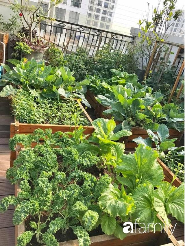 Chuyên gia trong lĩnh vực nhà vườn tại Hà Nội chia sẻ cách trồng rau đúng cách, đảm bảo nhà phố thoải mái rau sạch cho cả gia đình - Ảnh 4.