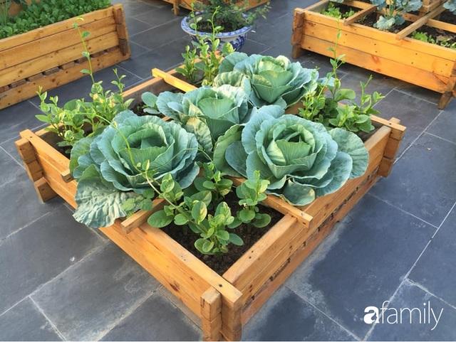 Chuyên gia trong lĩnh vực nhà vườn tại Hà Nội chia sẻ cách trồng rau đúng cách, đảm bảo nhà phố thoải mái rau sạch cho cả gia đình - Ảnh 6.
