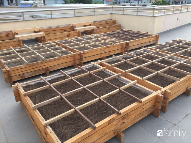Chuyên gia trong lĩnh vực nhà vườn tại Hà Nội chia sẻ cách trồng rau đúng cách, đảm bảo nhà phố thoải mái rau sạch cho cả gia đình - Ảnh 8.