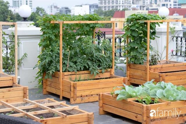 Chuyên gia trong lĩnh vực nhà vườn tại Hà Nội chia sẻ cách trồng rau đúng cách, đảm bảo nhà phố thoải mái rau sạch cho cả gia đình - Ảnh 9.