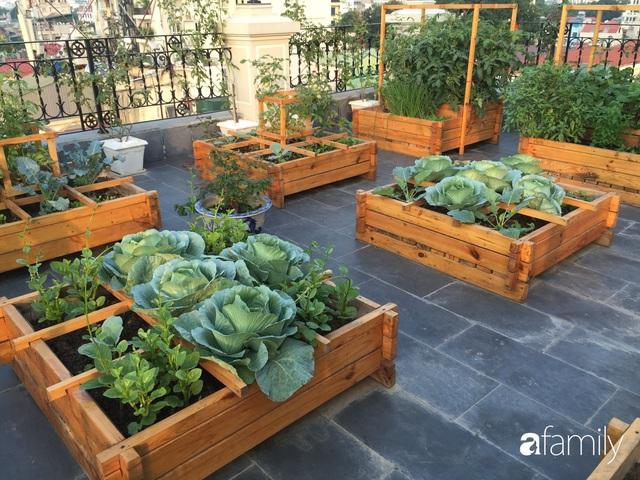 Chuyên gia trong lĩnh vực nhà vườn tại Hà Nội chia sẻ cách trồng rau đúng cách, đảm bảo nhà phố thoải mái rau sạch cho cả gia đình - Ảnh 11.