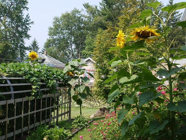 Khu vườn đủ loại rau quả đẹp như tranh của người phụ nữ trồng trọt từ năm 16 tuổi đến 63 tuổi - Ảnh 2.