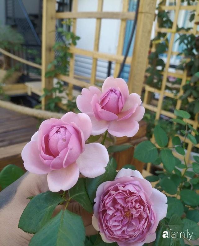 Ngôi nhà đẹp yên bình, lãng mạn nhờ người đàn ông đảm đang tự decor vườn và trồng đủ loại hồng ở Sài Gòn - Ảnh 12.