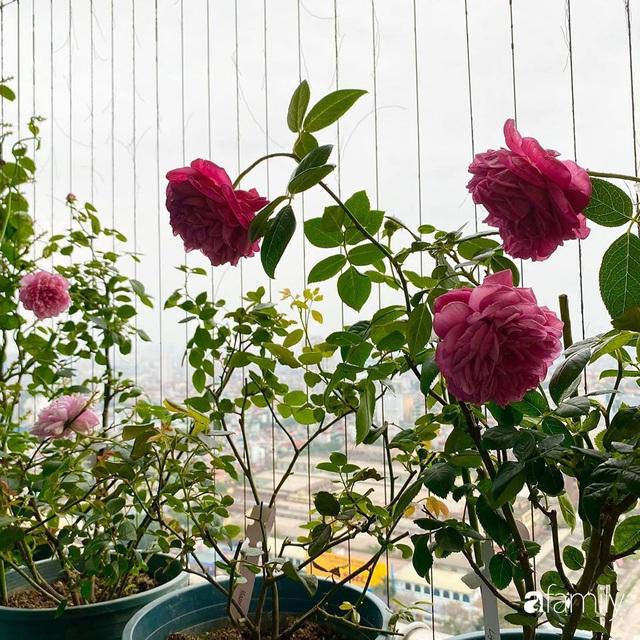 Mẹ Hà Nội chia sẻ bí quyết tự mua phụ kiện tạo nên vườn hồng đẹp mê ly ở ban công - Ảnh 11.