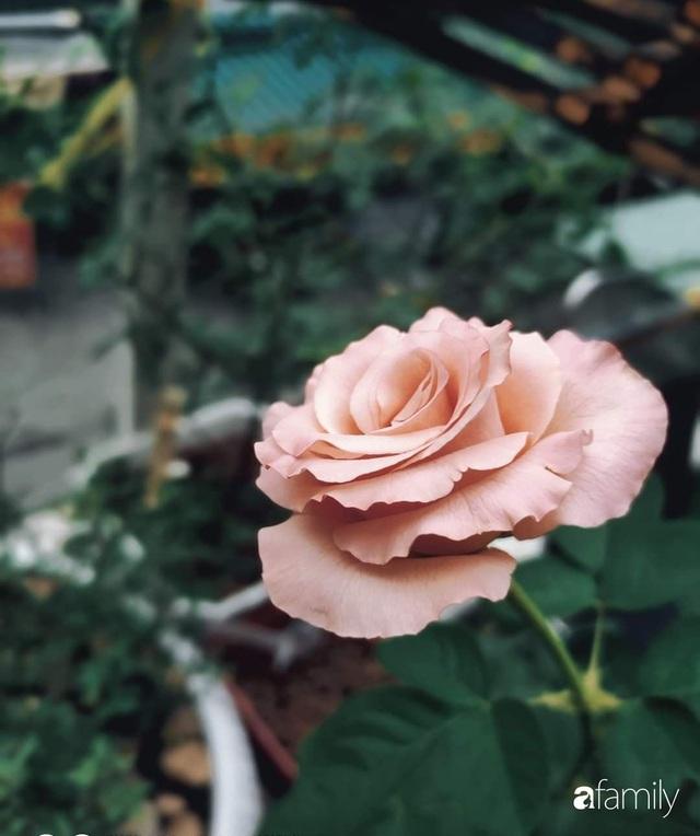 Ngôi nhà đẹp yên bình, lãng mạn nhờ người đàn ông đảm đang tự decor vườn và trồng đủ loại hồng ở Sài Gòn - Ảnh 13.