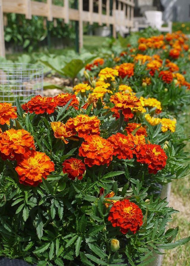 Khu vườn đủ loại rau quả đẹp như tranh của người phụ nữ trồng trọt từ năm 16 tuổi đến 63 tuổi - Ảnh 18.