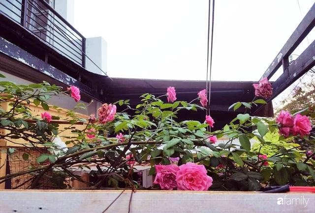 Ngôi nhà đẹp yên bình, lãng mạn nhờ người đàn ông đảm đang tự decor vườn và trồng đủ loại hồng ở Sài Gòn - Ảnh 18.