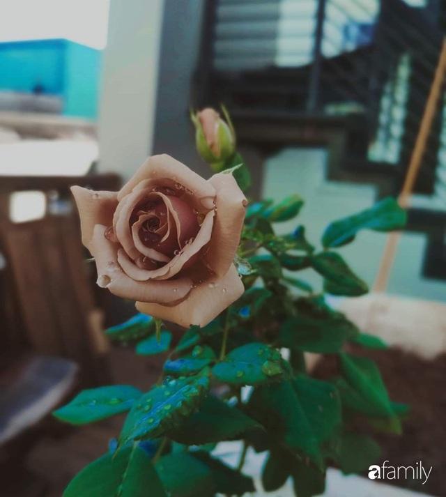 Ngôi nhà đẹp yên bình, lãng mạn nhờ người đàn ông đảm đang tự decor vườn và trồng đủ loại hồng ở Sài Gòn - Ảnh 24.