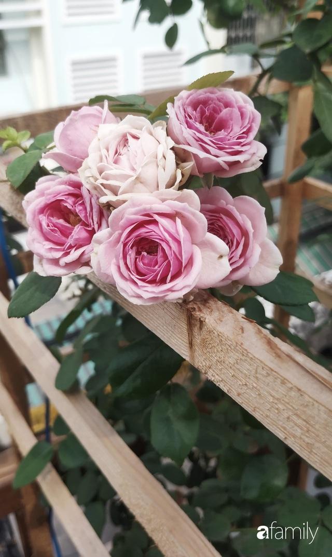 Ngôi nhà đẹp yên bình, lãng mạn nhờ người đàn ông đảm đang tự decor vườn và trồng đủ loại hồng ở Sài Gòn - Ảnh 26.