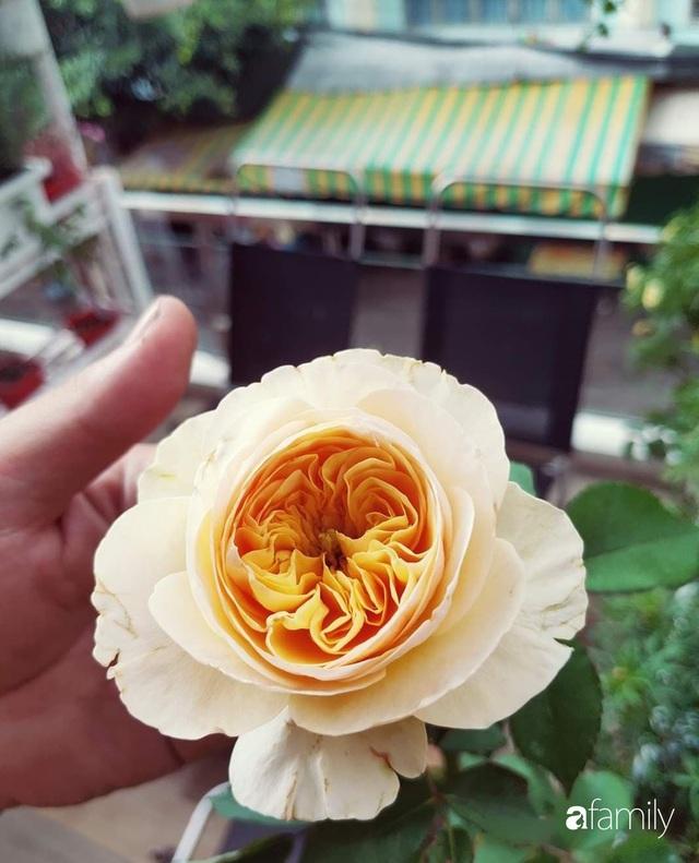 Ngôi nhà đẹp yên bình, lãng mạn nhờ người đàn ông đảm đang tự decor vườn và trồng đủ loại hồng ở Sài Gòn - Ảnh 27.