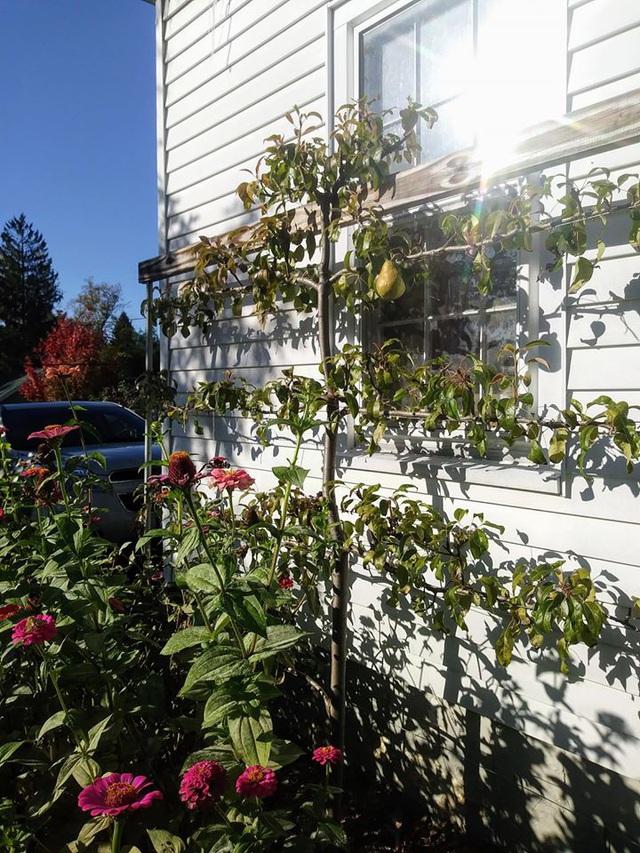 Khu vườn đủ loại rau quả đẹp như tranh của người phụ nữ trồng trọt từ năm 16 tuổi đến 63 tuổi - Ảnh 28.
