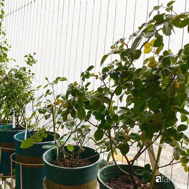 Mẹ Hà Nội chia sẻ bí quyết tự mua phụ kiện tạo nên vườn hồng đẹp mê ly ở ban công - Ảnh 4.