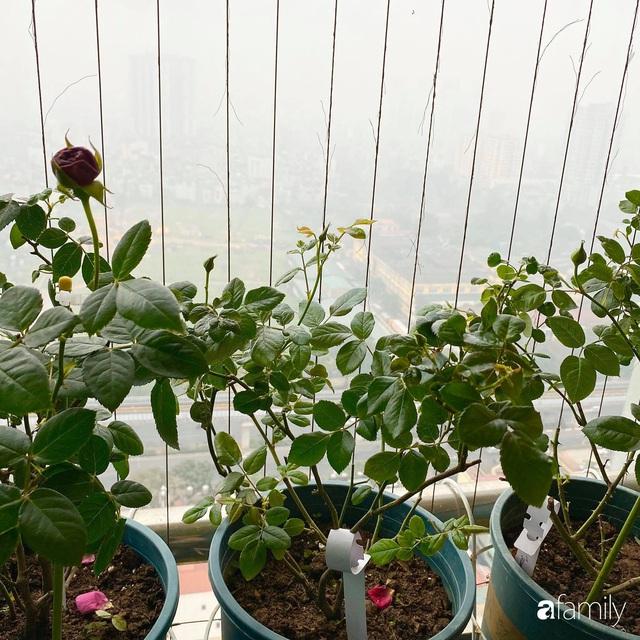 Mẹ Hà Nội chia sẻ bí quyết tự mua phụ kiện tạo nên vườn hồng đẹp mê ly ở ban công - Ảnh 5.