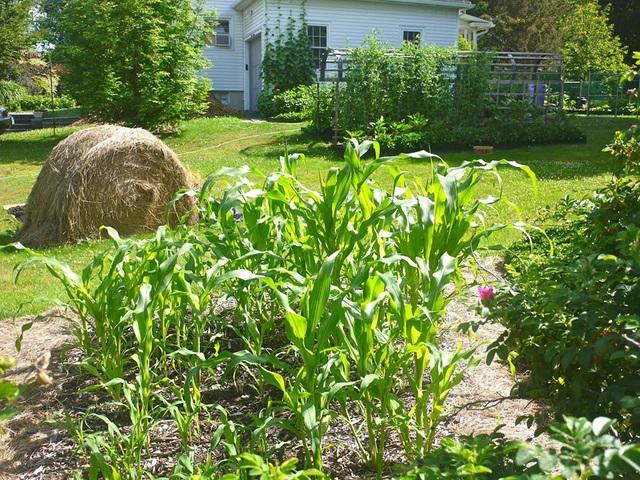 Khu vườn đủ loại rau quả đẹp như tranh của người phụ nữ trồng trọt từ năm 16 tuổi đến 63 tuổi - Ảnh 8.