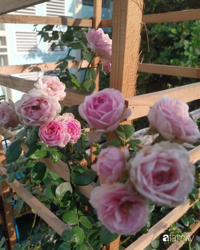 Ngôi nhà đẹp yên bình, lãng mạn nhờ người đàn ông đảm đang tự decor vườn và trồng đủ loại hồng ở Sài Gòn - Ảnh 8.
