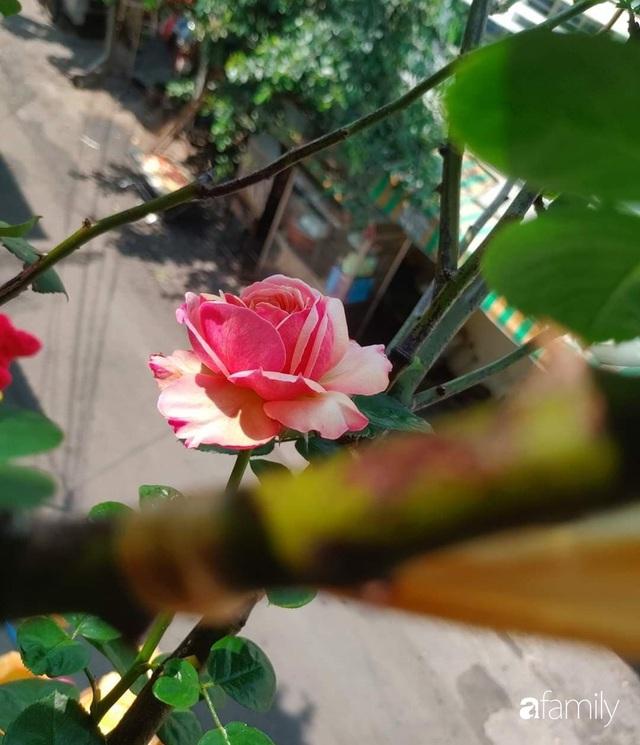 Ngôi nhà đẹp yên bình, lãng mạn nhờ người đàn ông đảm đang tự decor vườn và trồng đủ loại hồng ở Sài Gòn - Ảnh 10.
