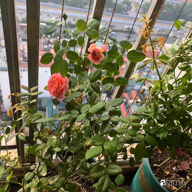 Mẹ Hà Nội chia sẻ bí quyết tự mua phụ kiện tạo nên vườn hồng đẹp mê ly ở ban công - Ảnh 9.