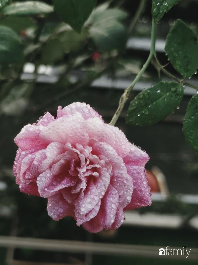 Ngôi nhà đẹp yên bình, lãng mạn nhờ người đàn ông đảm đang tự decor vườn và trồng đủ loại hồng ở Sài Gòn - Ảnh 11.