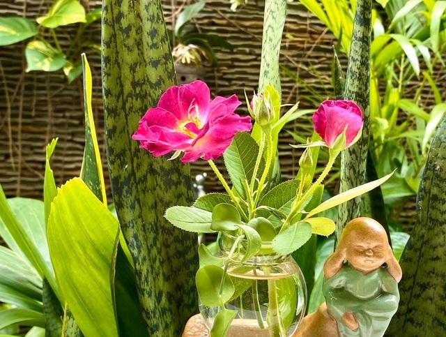 Ở nhà tránh dịch COVID-19 cả gia đình Quyền Linh thu hoạch bưởi mỏi tay trong khu vườn biệt thự - Ảnh 11.