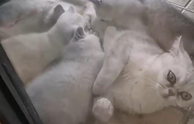 Mèo tự sống 40 ngày, sinh con khi cả nhà chủ nhập viện - Ảnh 2.