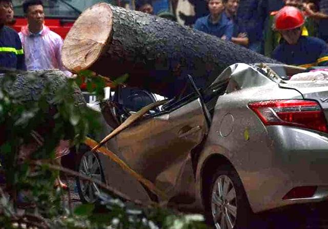 Xà cừ bật gốc trong cơn mưa to, đè bẹp chiếc xe Toyota Vios ở Hà Nội - Ảnh 2.