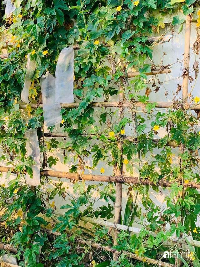 Ngôi nhà gần trăm năm tuổi bên cạnh khu vườn hoa hồng gói gọn những lặng lẽ, yên bình của xứ Huế mộng mơ - Ảnh 19.