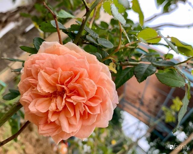 Ngôi nhà gần trăm năm tuổi bên cạnh khu vườn hoa hồng gói gọn những lặng lẽ, yên bình của xứ Huế mộng mơ - Ảnh 24.