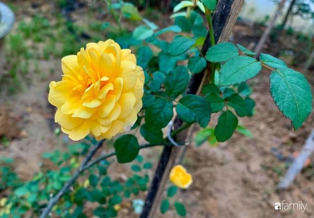 Ngôi nhà gần trăm năm tuổi bên cạnh khu vườn hoa hồng gói gọn những lặng lẽ, yên bình của xứ Huế mộng mơ - Ảnh 25.