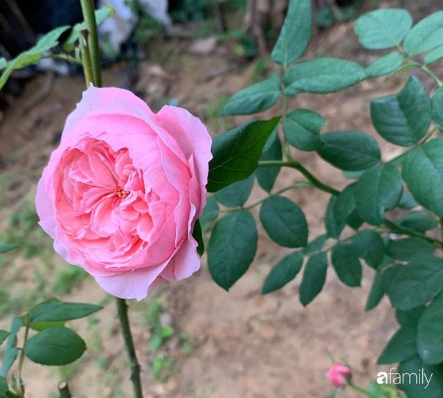 Ngôi nhà gần trăm năm tuổi bên cạnh khu vườn hoa hồng gói gọn những lặng lẽ, yên bình của xứ Huế mộng mơ - Ảnh 26.