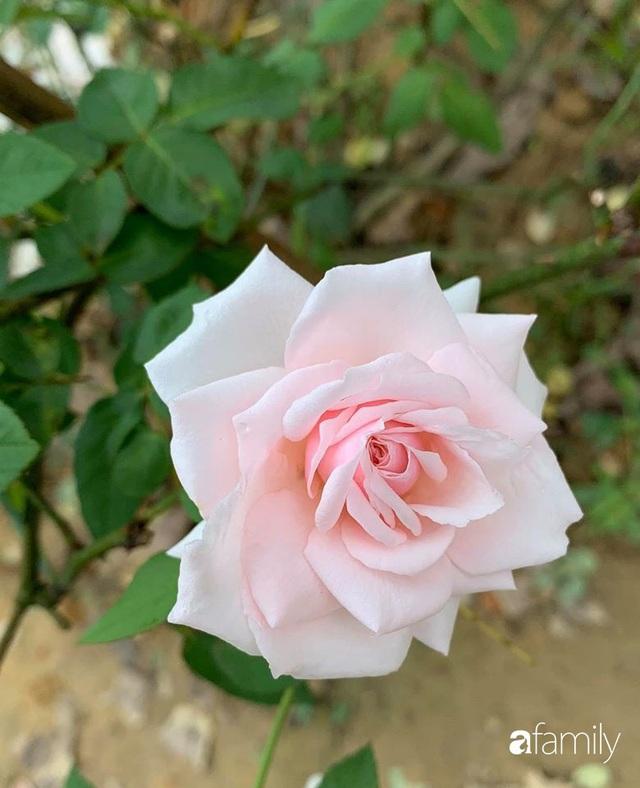 Ngôi nhà gần trăm năm tuổi bên cạnh khu vườn hoa hồng gói gọn những lặng lẽ, yên bình của xứ Huế mộng mơ - Ảnh 27.