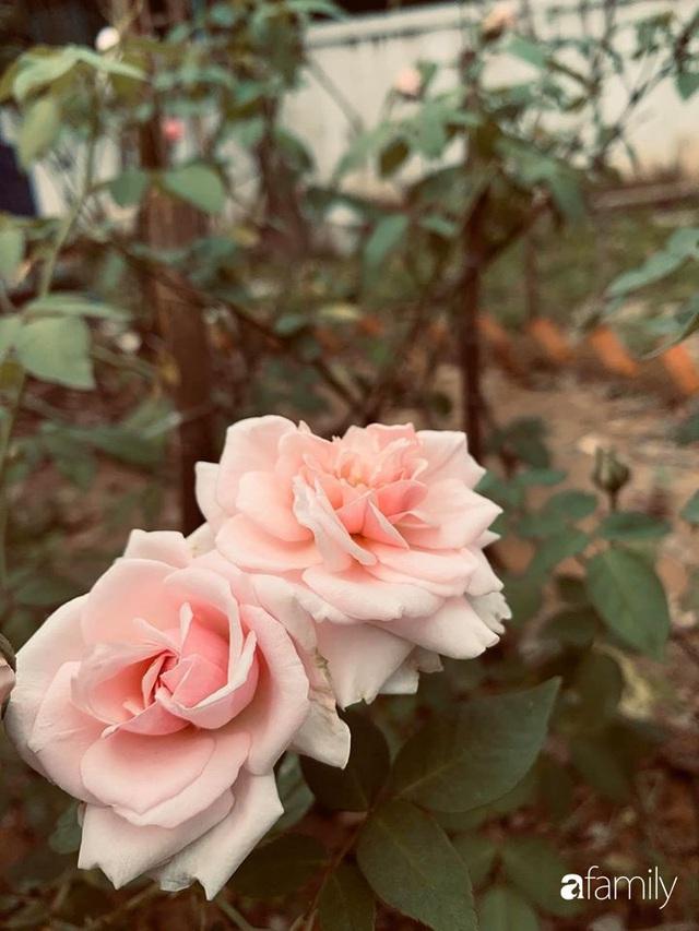 Ngôi nhà gần trăm năm tuổi bên cạnh khu vườn hoa hồng gói gọn những lặng lẽ, yên bình của xứ Huế mộng mơ - Ảnh 28.