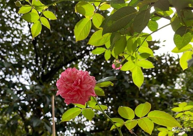 Ngôi nhà gần trăm năm tuổi bên cạnh khu vườn hoa hồng gói gọn những lặng lẽ, yên bình của xứ Huế mộng mơ - Ảnh 29.