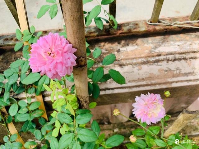 Ngôi nhà gần trăm năm tuổi bên cạnh khu vườn hoa hồng gói gọn những lặng lẽ, yên bình của xứ Huế mộng mơ - Ảnh 30.