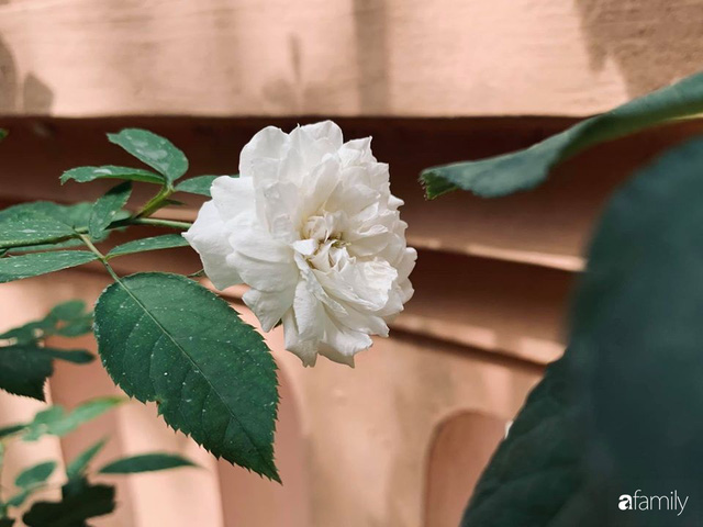 Ngôi nhà gần trăm năm tuổi bên cạnh khu vườn hoa hồng gói gọn những lặng lẽ, yên bình của xứ Huế mộng mơ - Ảnh 31.