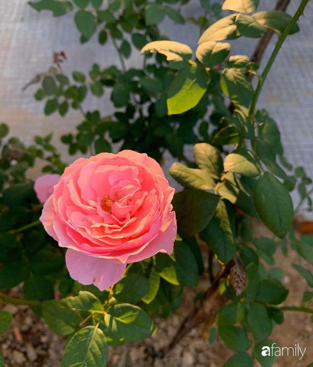 Ngôi nhà gần trăm năm tuổi bên cạnh khu vườn hoa hồng gói gọn những lặng lẽ, yên bình của xứ Huế mộng mơ - Ảnh 32.