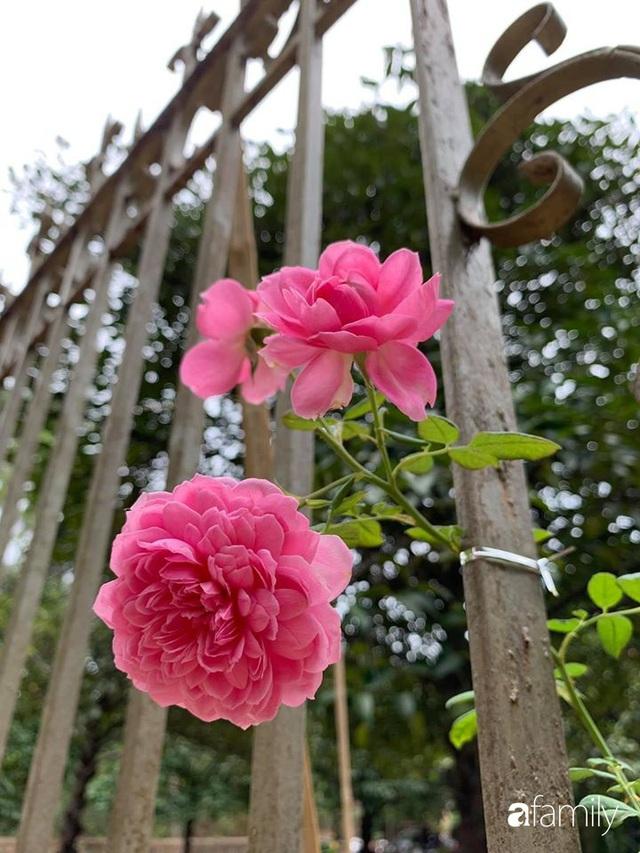Ngôi nhà gần trăm năm tuổi bên cạnh khu vườn hoa hồng gói gọn những lặng lẽ, yên bình của xứ Huế mộng mơ - Ảnh 33.