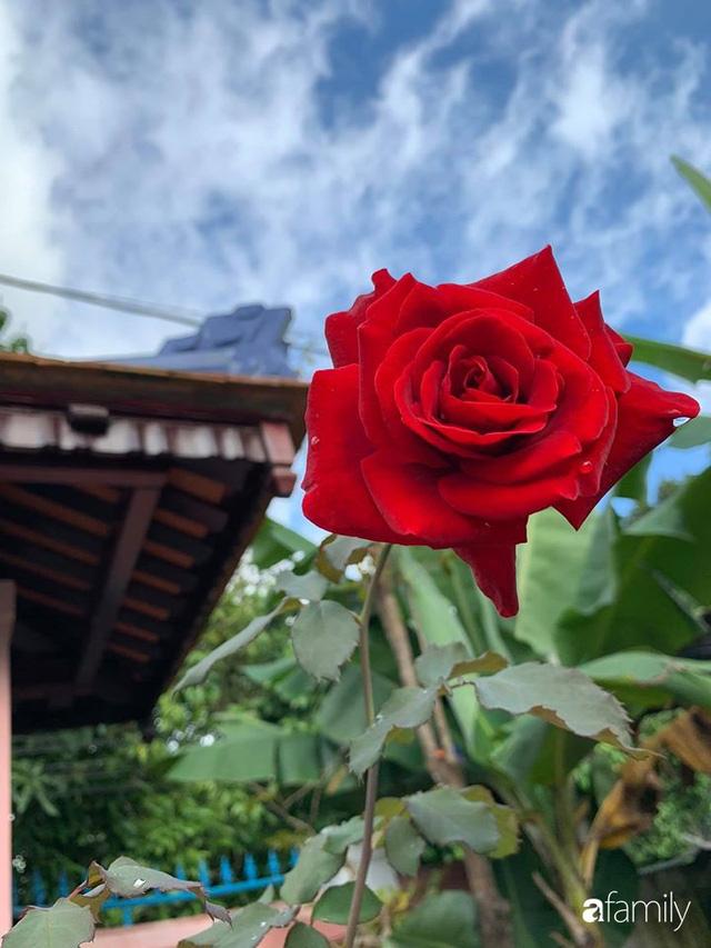 Ngôi nhà gần trăm năm tuổi bên cạnh khu vườn hoa hồng gói gọn những lặng lẽ, yên bình của xứ Huế mộng mơ - Ảnh 35.